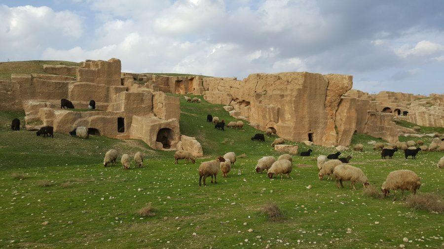 А сейчас на месте города мертвых пасут овец.